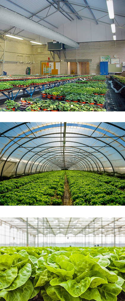 Examples of commercial gardening in climate controlled systems